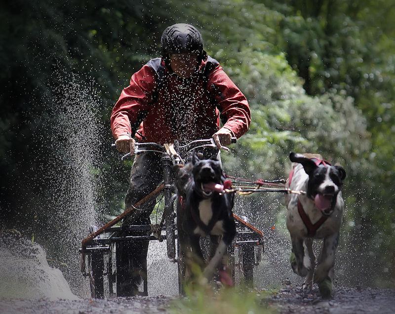 Dryland Mushing Villarrica 4 Dog Rig (Konrad Jakob - Aurora Austral)