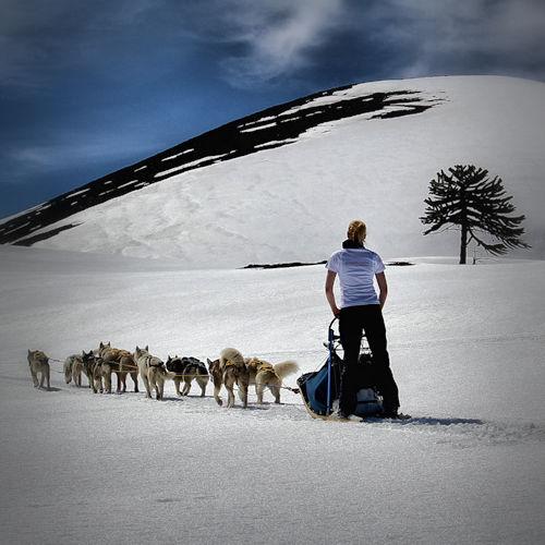 Aurora Austral Patagonia Husky follow the call of the wild! Tours en trineos tirados por perros. Maneja tu propio trineo con perros.
